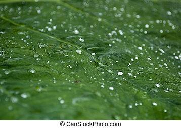 eau, vert, gouttes, feuille, il
