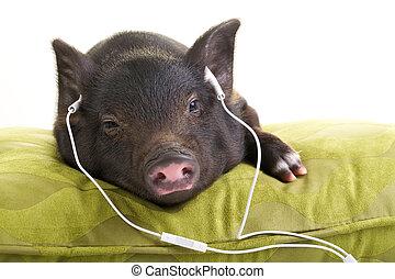 Eazy listening - Small black pig lying down on a green...