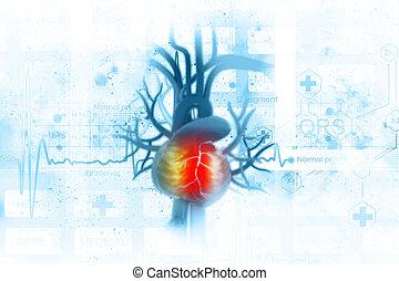ecg, coração, fundo, human