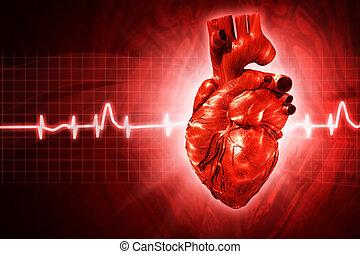 ecg, corazón, rendido, resumen, fondos, humano, 3d