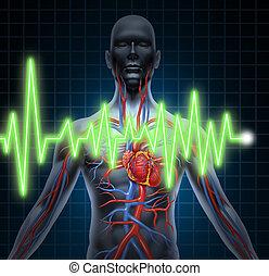 ecg, ekg, sistema, cardiovascular