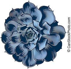 echeveria blue - illustration of echeveria succulent on ...