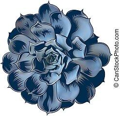 illustration of echeveria succulent on isoleted background
