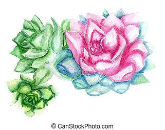echeveria, succulent, kunst