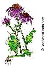 echinacea, 花, グランジ, はねる, イラスト