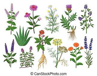 echinacea, flores, tomillo, lavandula, diseño, alfalfa, ...