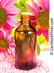Echinacea plant extract - Close up of purple echinacea ...