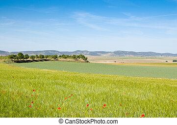 echte , agrarisch, ciudad, spanien, provinz, landschaftsbild