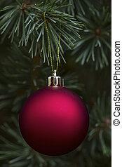 echte, edel, spar, met, hangend, rood, ornament