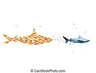 echte , hai, gemacht, stärke, goldfische, groß, ...