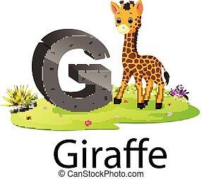 echte, schattig, g, alfabet, dierentuin, giraffe, dier