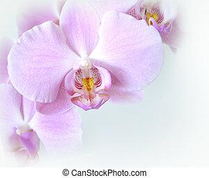 ecke, design, weich, orchideen