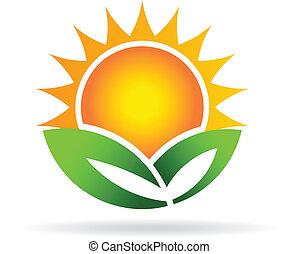 eco, 太陽, 植物, イメージ, ロゴ