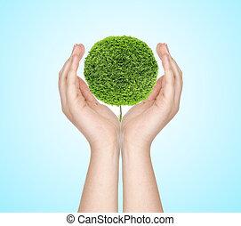 eco, 概念, -, 手, 藏品, a, 樹, 針對, a, 藍色的天空