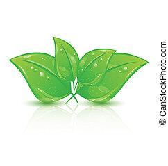 eco, 葉, 隔離された, 緑の背景, 白