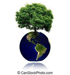 eco, 行星, 带, 树, 同时,, roots.