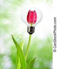 eco, 電球, エネルギー, 緑の背景