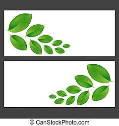 Eco banner  with green leaves  Vector illustration.