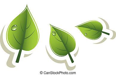 eco, brink loof, vector, ontwerp