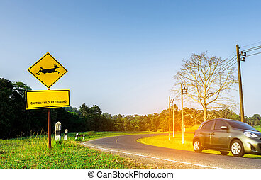 "Eco car of the tourist driving with caution during travel at curve asphalt road near yellow traffic sign with deer jumping inside the sign and have message ""caution wildlife crossing"". Clear blue sky."
