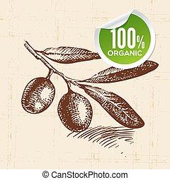 eco, cibo, verdura, fondo, schizzo, mano, disegnato, olive.