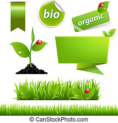 eco, coccinella, set, foglia, verde