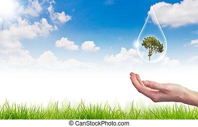 eco, conceito, :, árvore água, gota, contra, a, sol, e, a, céu azul