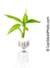 eco concept: light bulb with plant inside