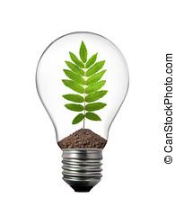 eco concept - lightbulb with rowan leaf inside