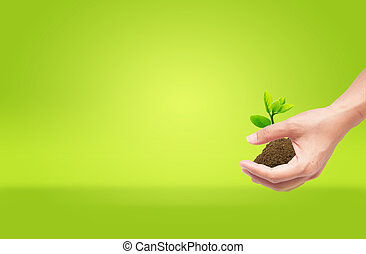 eco, dzierżawa, gleba, kiełek, zielony, ręka, pojęcie