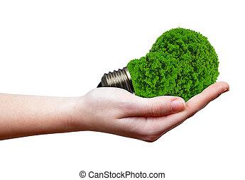 eco, energie, zwiebel