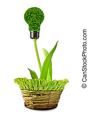 eco energy bulb in pot isolated on white