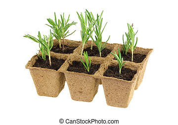 Biodegradable Plant Pots - Eco Friendly and Biodegradable...