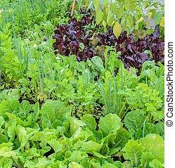Eco-friendly backyard vegetable garden