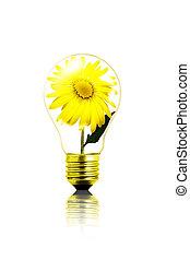 eco-friendly bulb