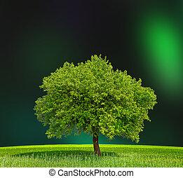 eco, grön, zon