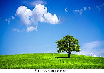 eco, grüner hügel