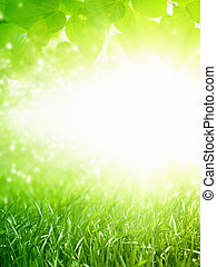 Beautiful nature eco background - green grass, green leaves, bright sun, green energy, spring background