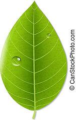 eco, groen blad