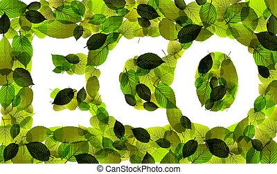 eco, hecho, palabra, leafs, vector