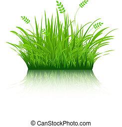 eco, herbe