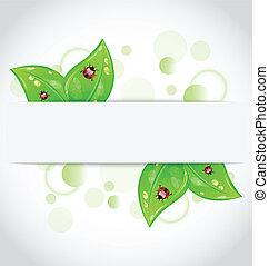 eco, hojas verdes, con, mariquitas, sobresalir, de, el,...