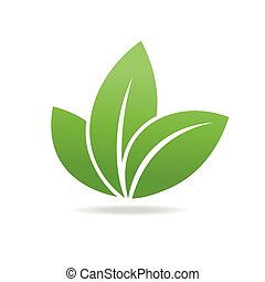 Eco icon with green leaf. Isolated on white background.