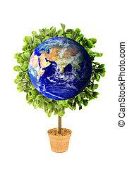 eco, la terre, plante, planète