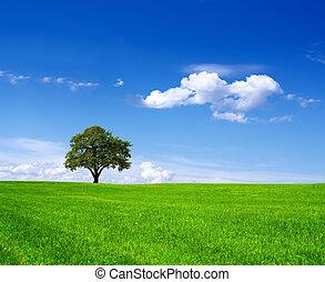 Eco Land