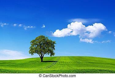 eco, landschaftsbild