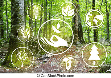 Eco logo and forest, take care of the forest it brings us clean air.