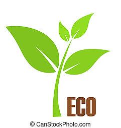 eco, pianta