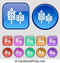 Eco with green leaf icon sign. A set of twelve vintage buttons for your design. Vector