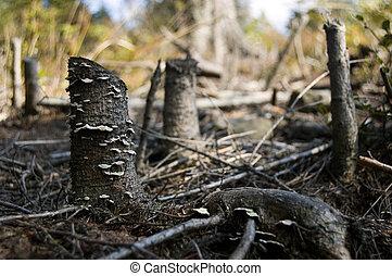 ecológico, después, árboles muertos, desastre